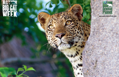Free Wildlife Stock Video Footage Download 4K & HD Clips