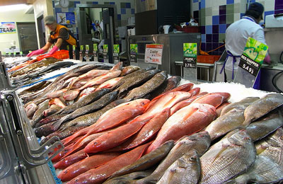 Bahrain fish stocks could run out in 5 years for Fishing store portland
